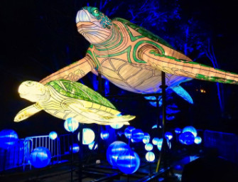 Taronga Centre Celebrates Vivid Sydney With Illuminated Dining Experience